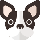 ペットのフレンチブルドッグ